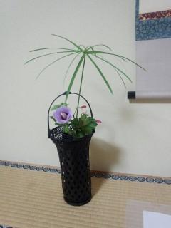 茶花|むくげ、破れ傘、インド桜
